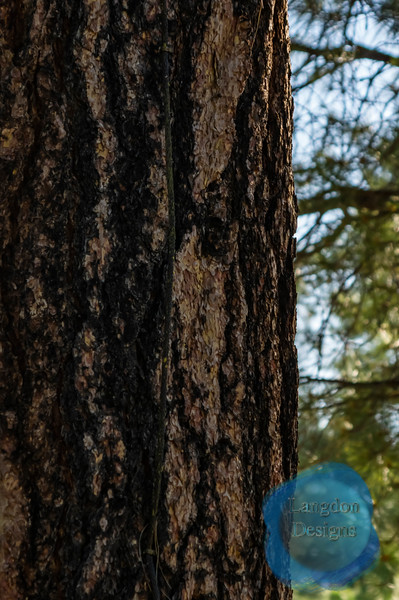 Barking Up a Tree