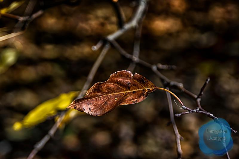 Leaf Hangs On