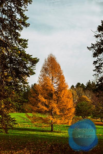 A Tree Alone