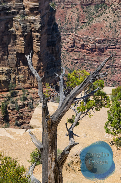 Dead Wood in the Canyon