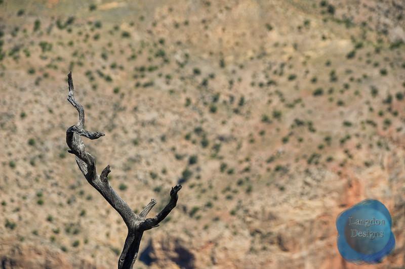 Grand Canyon Tree