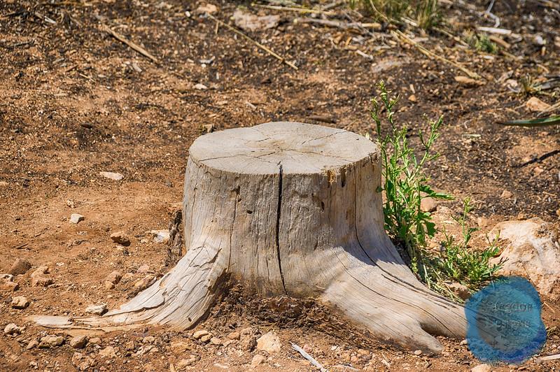 Tree Stump in the Desert