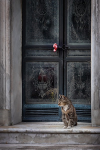 Argentina, Buenos Aires: One of the cemetery cats that live and wander around the famed Recoleta Cemetery in Buenos Aires.