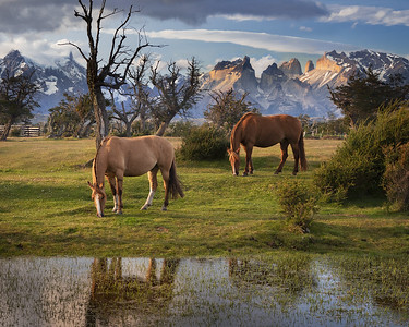 Chile, Patagonia: Horses graze near Torres del Paine National Park.