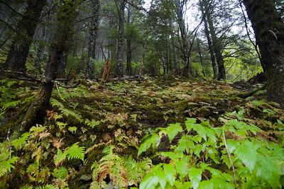 Forest Hike #1, Juneau Alaska