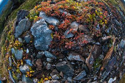 Juneau Hike #3, Southeast Alaska