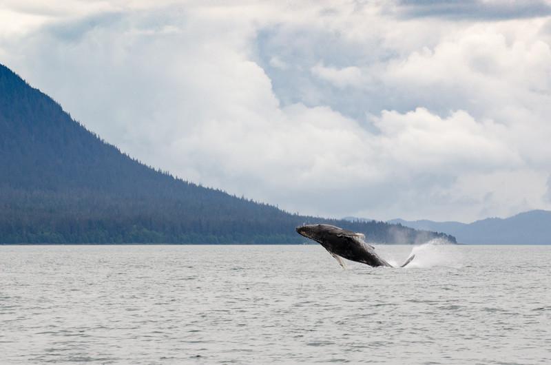Humpback Whales #3, Juneau Alaska