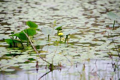 Swamp (wetlands) at Cave Run Lake