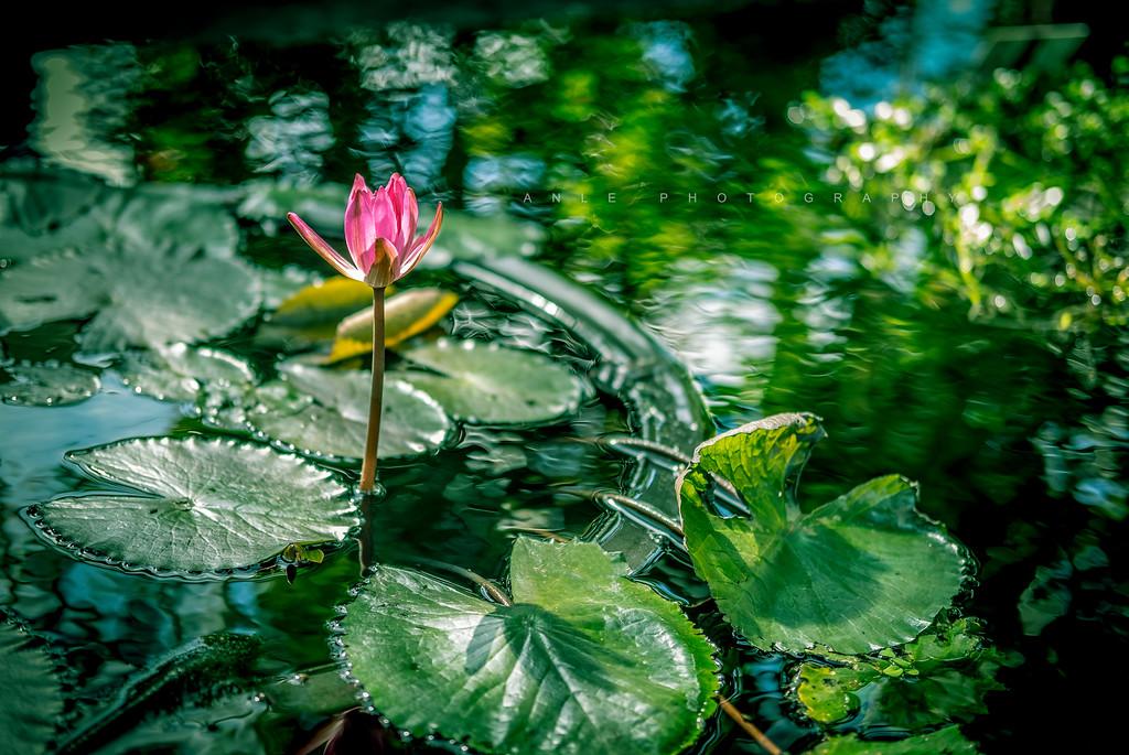 peaceful mind. Peaceful life