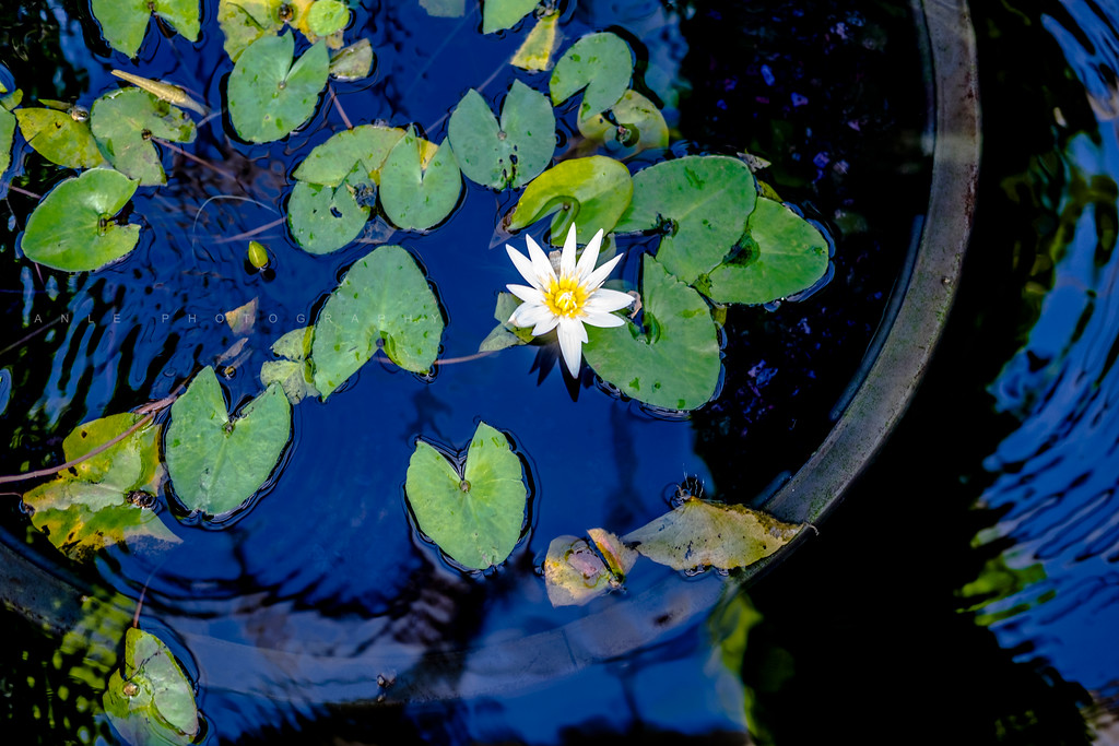 """""""No mud, no lotus"""""""