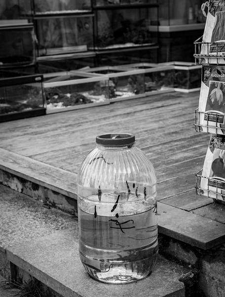 Leeches for sale- Istambol