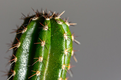 Prickly cactus close up