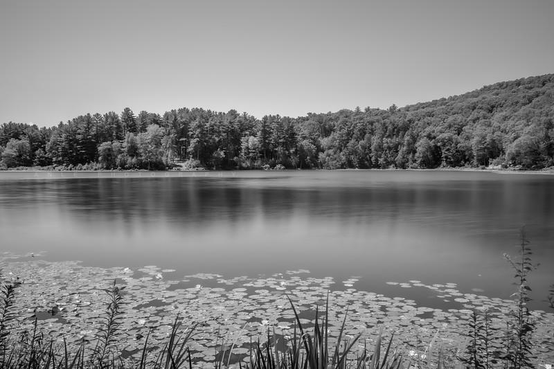 Tyrrel Lake
