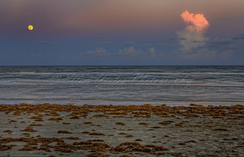 Seaweed on Surfside Beach ~ Moonrise ~