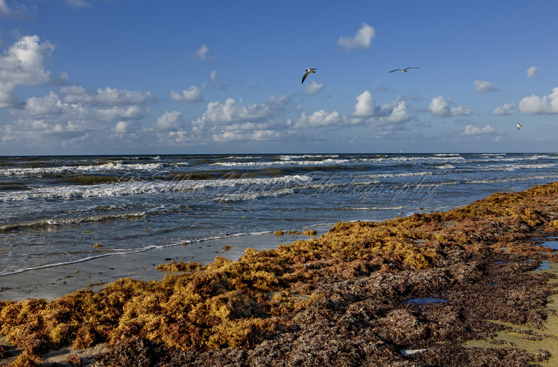 Tons of Seaweed on Beach