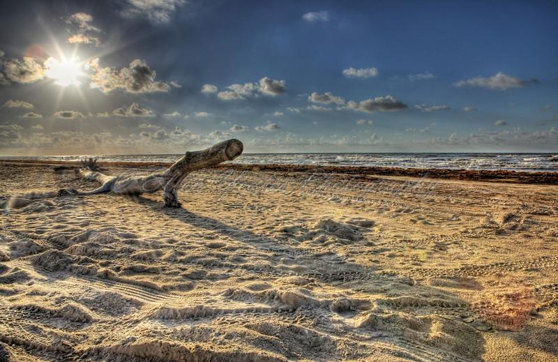 Retired Drift Wood -Sand Everywhere