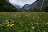 Fields of Lauterbrunnen