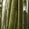 Sagano-Arashiyama, Bambooforest, Kyoto, Japan