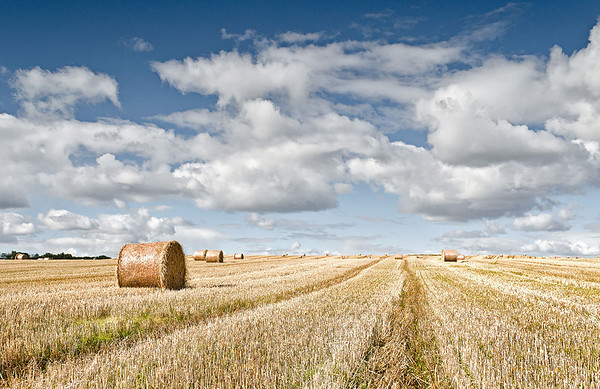 Perthshire Bales