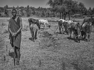 Maasai Herder