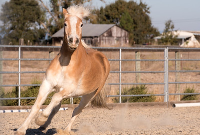 """Mike"" - Equi-Ed Therapy Horses_13, Sonoma County, California"
