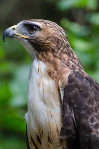 Kroschel Films Wildlife Center, Haines, Alaska