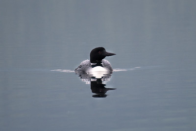 Loon #1 - Brooks Range Mountains, Alaska