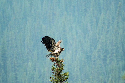 Eagle #2 - Brooks Range Mountains, Alaska