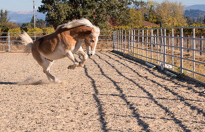 """Mike"" - Equi-Ed Therapy Horses_12, Sonoma County, California"