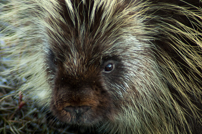 Porcupine #3 - Brooks Range Mountains, Alaska
