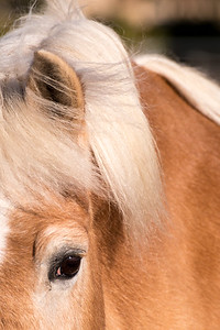 """Mike"" - Equi-Ed Therapy Horses_8, Sonoma County, California"