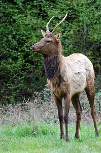 Elk #1 - Humboldt County, CA