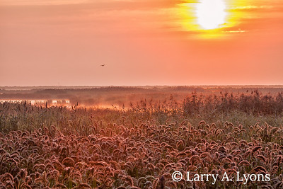 Sunrise  At The Forsythe Refuge