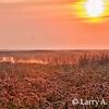 Sunrise  At The Forsythe Refuge