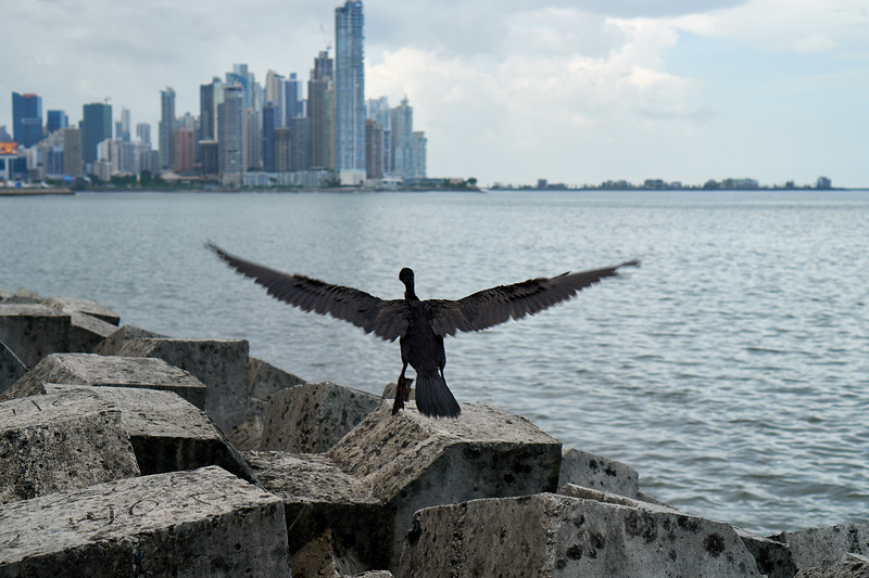 The black bird of finance
