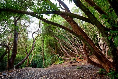 Gwyllt Tree Tunnel