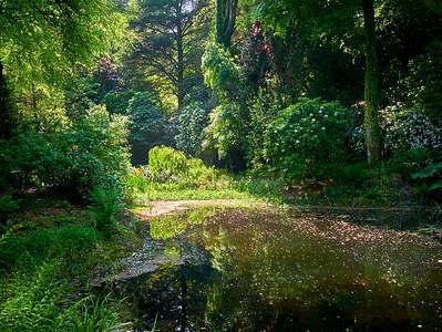 Gwyllt Pond