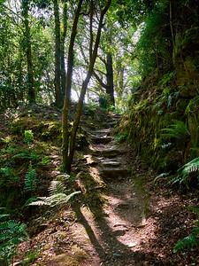 Gwyllt Steps