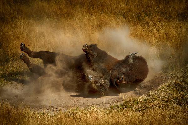 Bison Bath