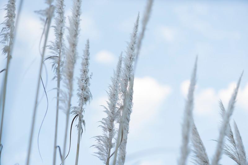 Willow Sky