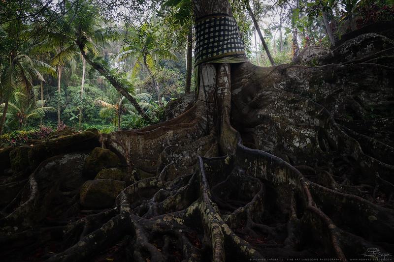 Sacred-Banyan.jpg