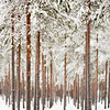 Swedish Snow 2