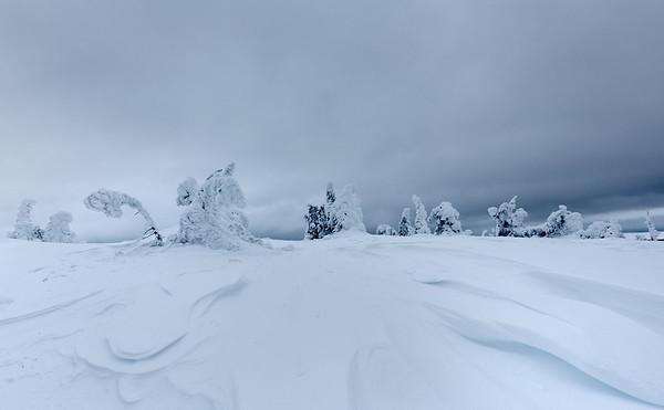 Finland Frozen Forest 7