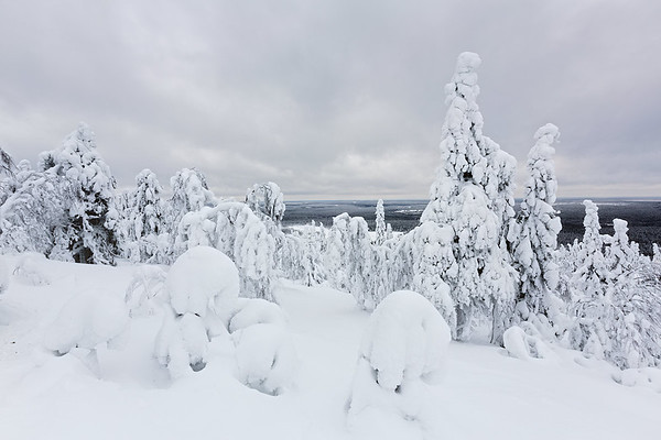 Finland Frozen Forest 3