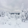 Finland Frozen Forest 3