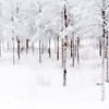 Swedish Snow 4