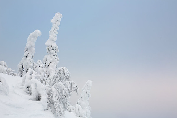 Finland Frozen Forest 1