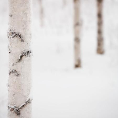 Swedish Snow 1