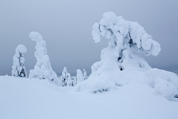 Finland Frozen Forest 2