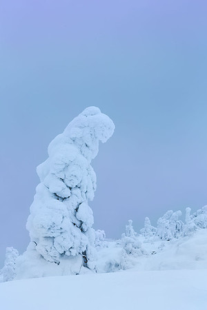 Finland Frozen Forest 5